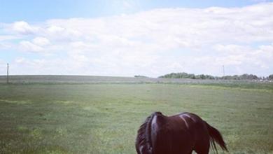 at-pasture-.png