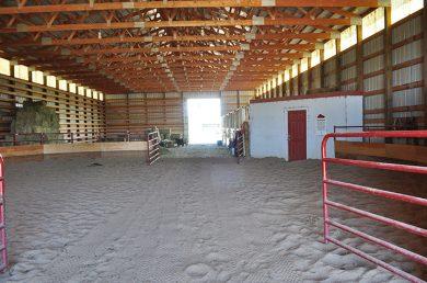 Teaching Horses to Keep Calm